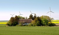 small cottage with thatched roof in a fieldgrove in front of wind wheels, Germany, Schleswig_Holstein, Northern Frisia