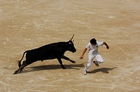 Bullfighting in the arena of Saintes Maries de la Mer, La Camargue, Provence, France, Europe