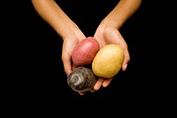 Human hands holding colorful potatoes in cupped hands