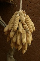 Corn hang up to dry, Pakete, Cameroon, Africa
