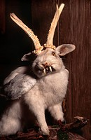 Wolpertinger, Bavarian fabulous creature, Germany