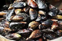 Mussels displayed in a fish shop, Istanbul, Turkey