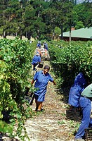 Buitenverwachting, winery, Western Cape, South Africa