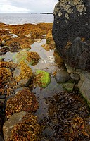 Rock pool and seaweed at Trotternish coastline