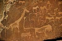 Twyfelfontein bushman rock paintings, Namibia
