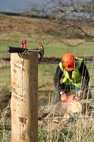 Cutting trees at Beltie Burn near Torphins