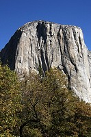 Face of Yosemite National Parks El Capitan, with a baseline of trees. View from Yosemite Valley in Fall.