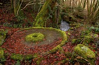An old millstone covered with moss and leaves in woodland with the mill stream behind, Creuse, France