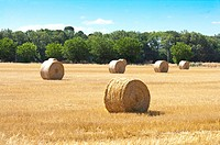 Hay in the Field, France