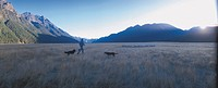 Shepherd with sheep herd, Milford, South island, New Zealand