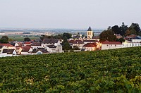 France, Champagne, Oger village Vinyards background.