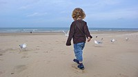 Young boy is feeding gulls on the beach, Netherlands, Noordwijk