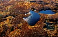beaver pond in autumn tundra, USA, Alaska, Denali Nationalpark