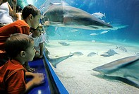 Children watching the sand and tiger sharks, sea water aquarium, Ozeanografico, Cidudad de las Artes y las Ciencias Science City, Valencia, Spain