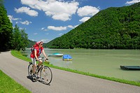 Female cyclist riding along Danube river, Danube Cycle Route Passau to Vienna, Schloegen, Upper Austria, Austria