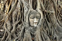 Buddas head enclosed by roots, Ayutthaya, Wat Mahatat, Thailand, Asia