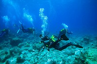 Underwater diving, Maldives, Indian Ocean