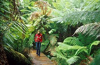 Boardwalk in Mait´s Rest Rainforest, Great Ocean Road, Victoria, Australia