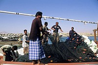 fishermen on the harbour of Sur,Sultanate of Oman,Arabian Peninsula,Asia