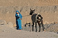 Man with stubborn mule Equus asinus, Atlas Mountains, Morocco, Africa