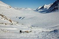 Greenland Dog Canis lupus f. familiaris, tour with dog sledge to Lillefjord, Greenland, Ostgroenland, Tunu, Kalaallit Nunaat, Scoresbysund, Kangertitt...