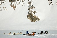 Greenland Dog Canis lupus f. familiaris, resting dog sled, Greenland, Ostgroenland, Tunu, Kalaallit Nunaat, Liverpool Land, Lillefjord