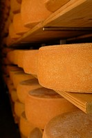 Bergkaese cheese stored on wooden bords for maturation
