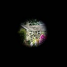 Tunnel vision. Patient´s_eye view of garden flowers and a house, in a patient with tunnel vision. This symptom involves the loss of peripheral vision,...