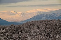 view over snowy coniferus forest and snow covered mountain range in morning light, Norway, Romsdalen