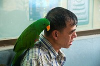 bird on the shoulder at the Chatuchak Weekend Market in Bangkok Thailand
