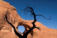 Ear of the Wind Arch and small tree sillouetted in foreground, Mystery Valley, Monument Valley Navajo Tribal Park, Arizona, USA