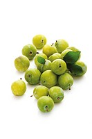 Greengages Prunus italica with small leaves