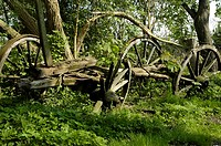 Old wood daring wheel
