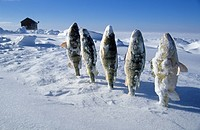 Frozen fish in the snow, Mille Lacs Lake, Minnesota, USA