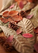 Fallen leaves and pinecone