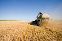 Tractor harvesting barley