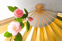 Camellias and a folding fan
