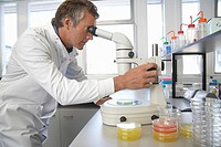 Male lab worker adjusting microscope to examine petri dish (thumbnail)