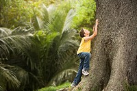 Boy Climbing Large Tree (thumbnail)