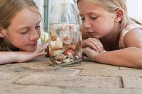Two girls 7_9 10_12 looking at shells in jar close_up
