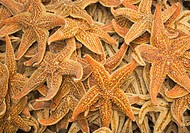 Dried starfish on a street market in Hong Kong, China
