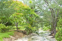 Stream in grove, Saipan Island, USA