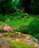 Rowallane Garden, Co Down, Ireland, Azaleas and Potentilla in the rock garden during Spring