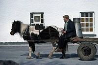 Traditional Farming, Milk Delivery to Dairy, By Horse and Cart