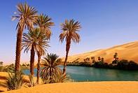 Palm trees on the bank of the Um el Maa lake in the Awbari sand sea, Sahara desert, Libya