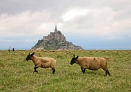 Sheep Running in Field With Mont Saint Michel in Background, France