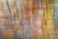 Abstract, Blurred, Nature,