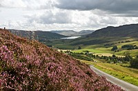 GLEN QUAICH PERTHSHIRE Roadside heather road leading into Glen Quaich valley
