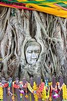 Buddha head statue entwinen within the roots of a banyan tree. Ayutthaya Historical Park. Ayutthaya city, Thailand