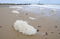 Sea foam caused by phytoplankton bloom, washed up on beach, Walcott, Norfolk, England, october